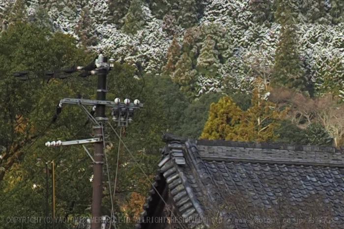 P2190038_2020yaotomi.jpg