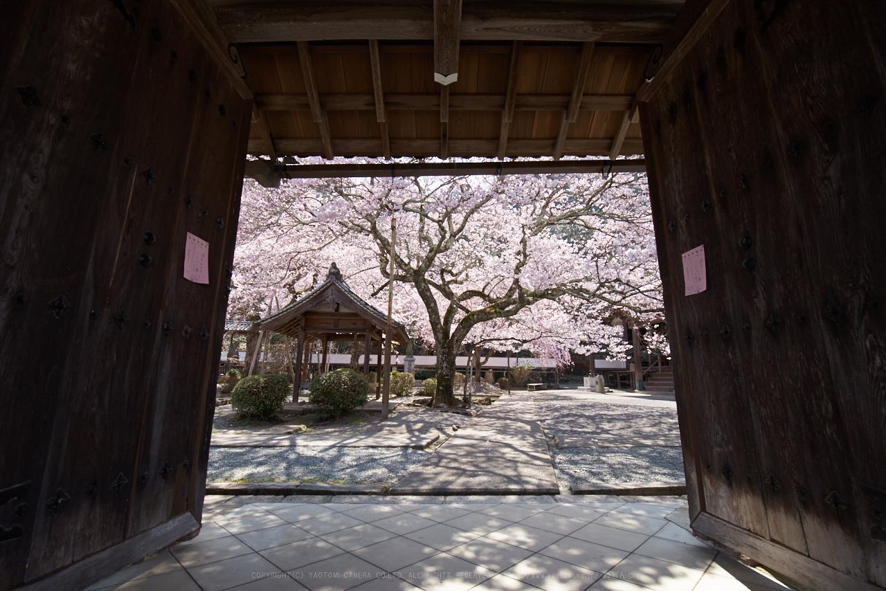 https://www.yaotomi.co.jp/blog/walk/PK1_1352_15%20mm_F9_2018yaotomi.jpg