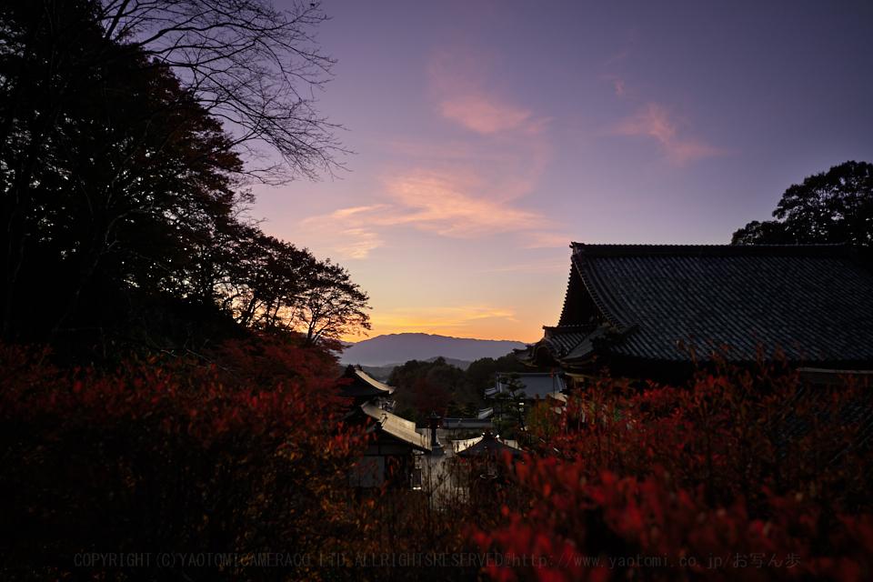 https://www.yaotomi.co.jp/blog/walk/SDIM0561%2C20%20mm%2CF3.5%2Ciso100.jpg