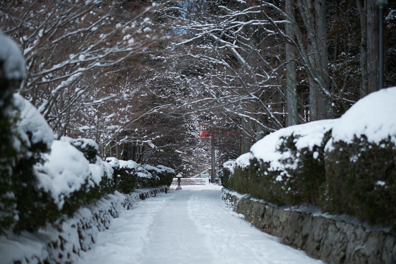 https://www.yaotomi.co.jp/blog/walk/XT2F8406%2C56%20mm1.2_yaotomi.jpg