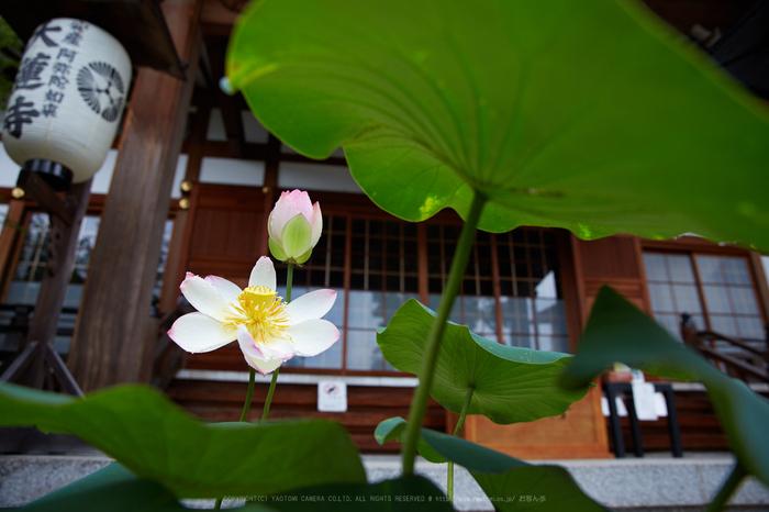 IMG_9477,24 mm_2017yaotomi.jpg
