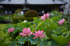 IMG_9537,70 mm_2017yaotomi.jpg