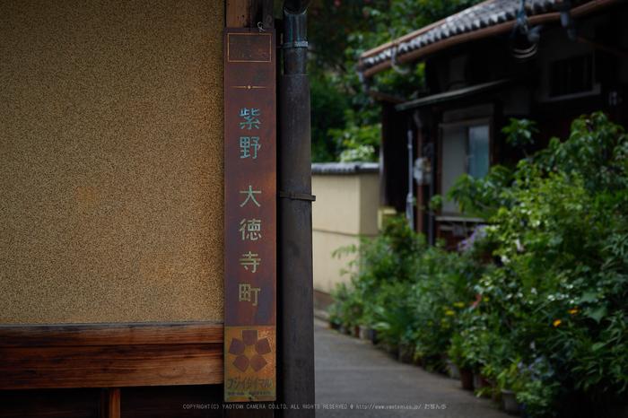 P5310897,2017yaotomi.jpg