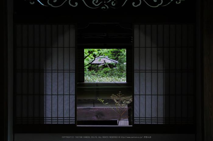 SDQH0187,2017yaotomi.jpg