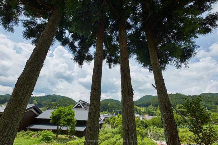 IMG_0078,2017yaotomi.jpg
