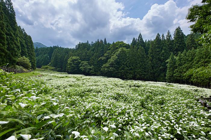 IMG_9951,14 mm_2017yaotomi.jpg