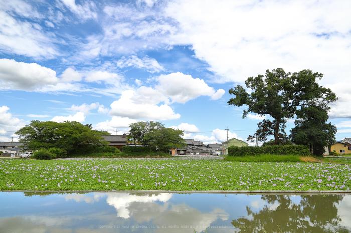 IMG_0386dpp,24 mm_2017yaotomi 1.jpg