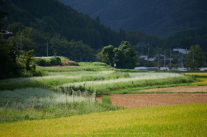 DSC_1217,185 mm(17-09-13)yaotomi.jpg