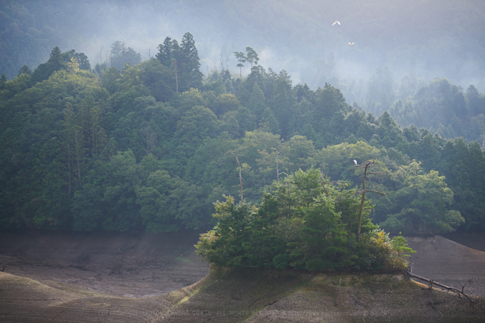 DSC_1556,70 mm(17-09-30)yaotomi.jpg
