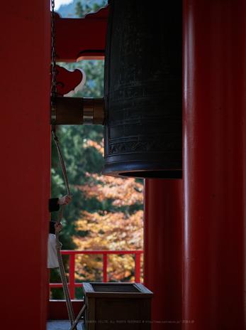 PB040502,45 mm1.2_yaotomi.jpg