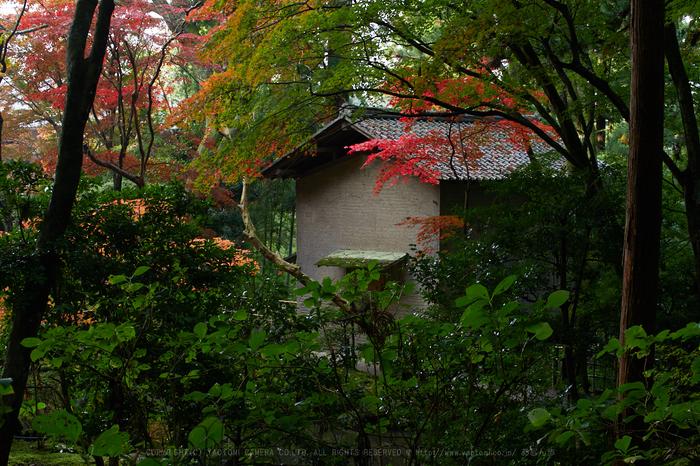 PB150307,30 mm6.3_yaotomi.jpg