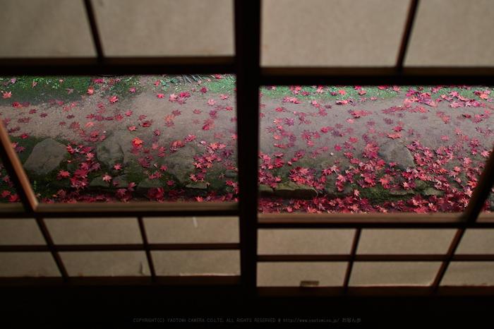 PB150603,16 mm1.4_yaotomi.jpg