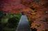 IMG_0896,70 mm2.8_yaotomi (2).jpg