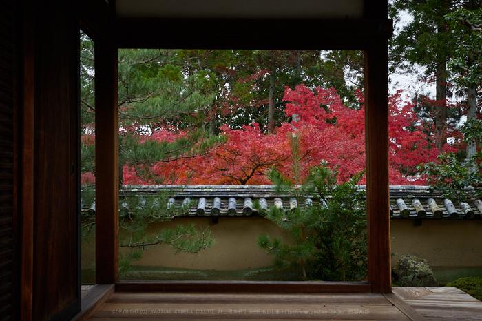 IMG_0935,48 mm8_yaotomi 2.jpg