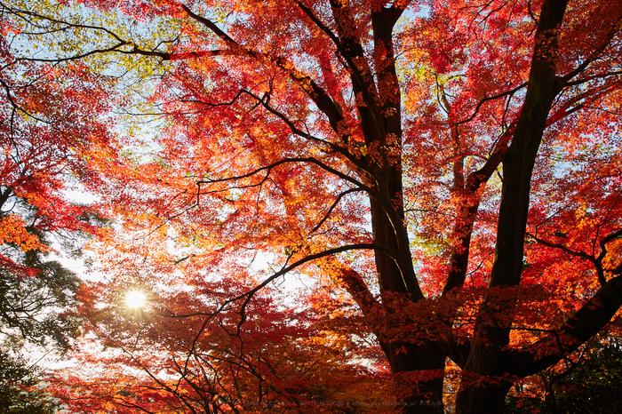 IMG_1459,26 mm8_yaotomi.jpg