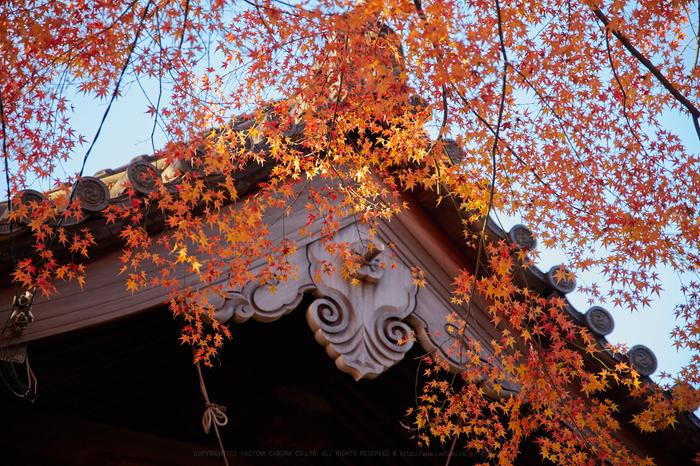 IMG_1490,70 mm2.8_yaotomi.jpg