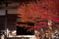 IMG_1547,70 mm2.8_yaotomi.jpg