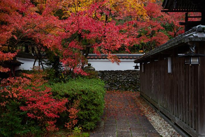 IMG_9664,42 mm3.2_yaotomi.jpg