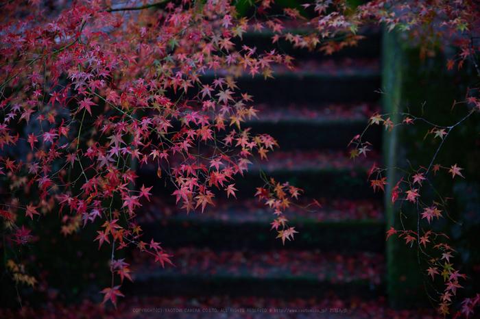 IMG_9718,70 mm2.8_yaotomi.jpg