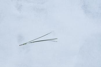 XT2F8566,35 mm5_yaotomi 1.jpg