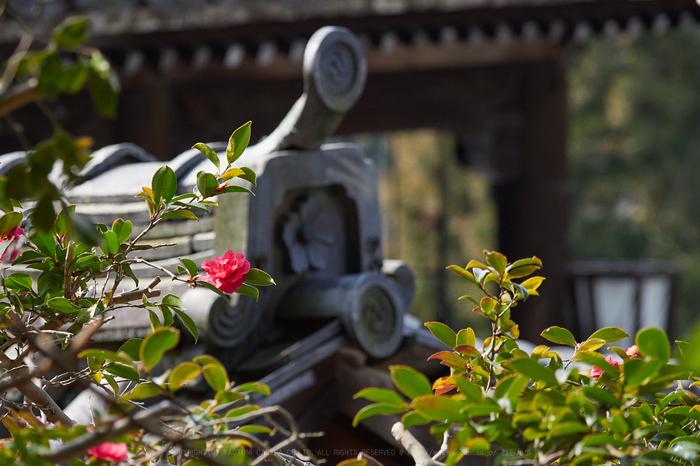 P2240356_100 mm_F4_2018yaotomi.jpg