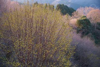PK1_0323,43 mm_2018yaotomi.jpg