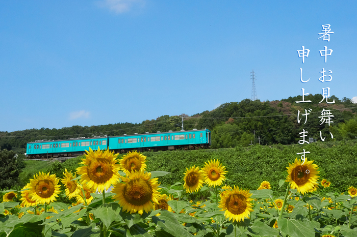P7310263,暑中.jpg